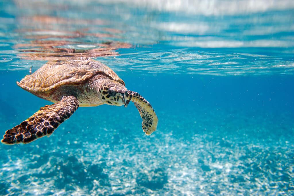 plongee-Seychelles